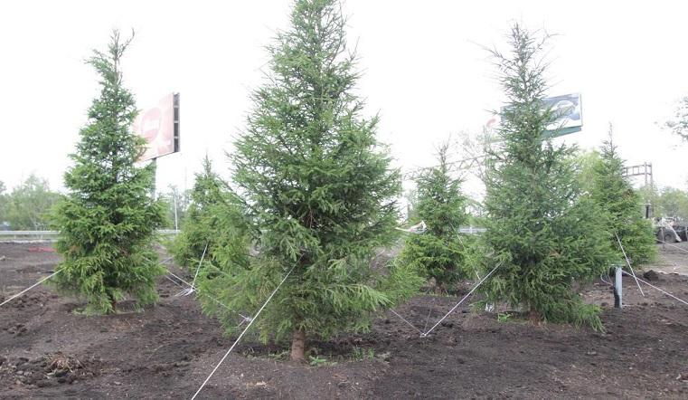 Вместо серых дорог. На развязках Челябинска сделают подсветку и высадят деревья
