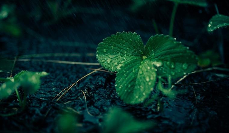 Пришли дожди – пошли грибы. Синоптики рассказали о погоде на Урале