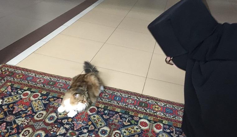 «Молиться ходит». Рыжий кот стал хранителем монастыря на Южном Урале