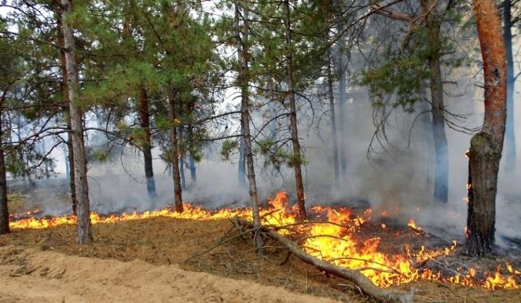 Горим. Аномальная жара принесла на Южный Урал новую беду ВИДЕО