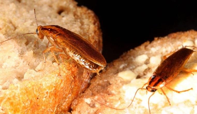 Чем опасны. Ученые рассказали всю правду о тараканах