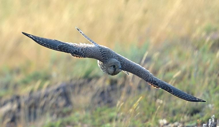 Пернатая угроза. На Урале заметили птенцов крупных хищников, которым 3 миллиона лет