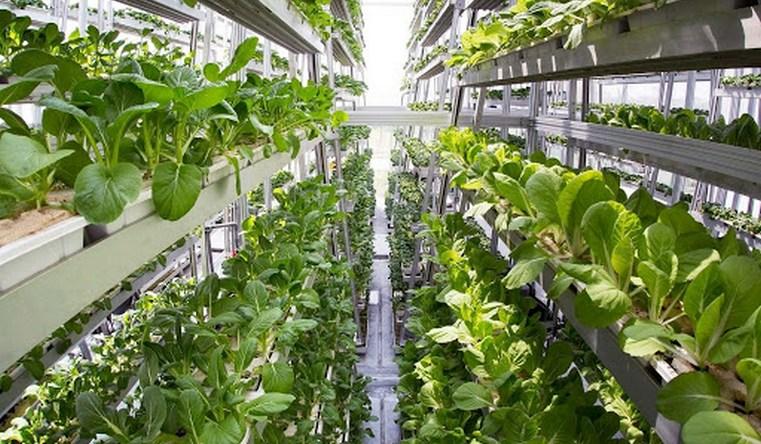 Салат с бактериями. Сальмонеллы научились проникать внутрь растений