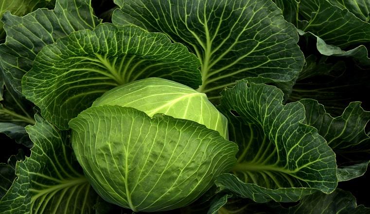 Отравляют организм. Ученые назвали 10 самых опасных овощей