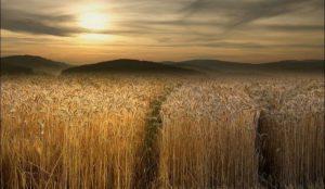 Приметы на 27 июля. Как защитить урожай от плохой погоды