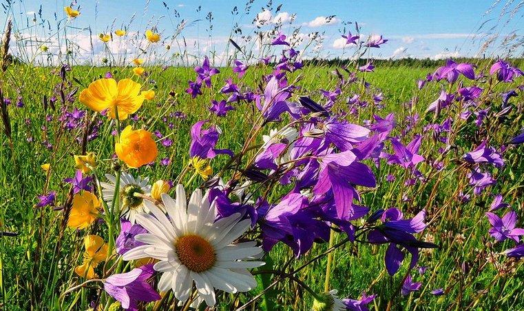 """Рай в шалаше категории """"люкс"""". На Южном Урале набирает популярность новый вид туризма"""