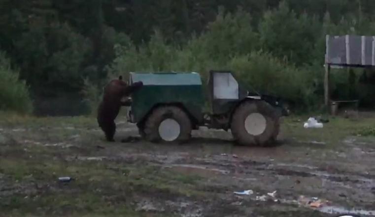 Пытался разобрать автомобиль. На Урале на базу отдыха пришел медведь ВИДЕО