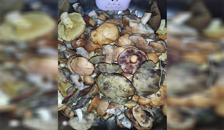 Время собирать грибы. Жители Урала рассказали о лучших местах для тихой охоты