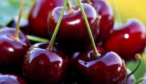 Гиганты с десертным вкусом. Уральские ученые вывели новые сорта ягод
