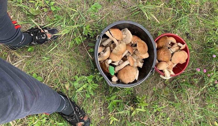 Не все грибы съедобны: 700 руб. за килограмм белых просят придорожные торговцы на Урале