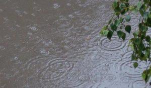 Мокро и туманно. Дожди надолго зарядили в Челябинской области