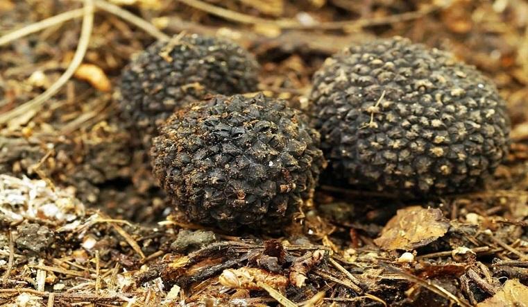 Лучше не трогать. Редкие грибы с запахом чеснока нашли в лесу на Урале. Фото: top10a.ru