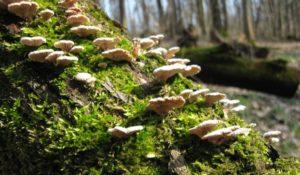 Подавляют рак. Ученые открыли у грибов на Урале лечебные