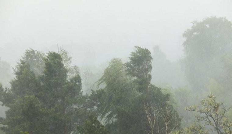 Шквалистый ветер в Челябинской области: вырывает деревья с корнями