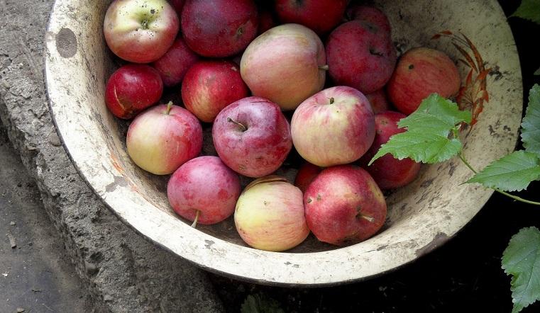 Спас: медовый, яблочный и ореховый. Какого числа отмечать и что нельзя делать