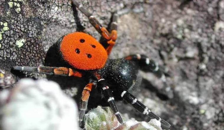 Редкие и опасные. На Южном Урале обнаружили ядовитых пауков