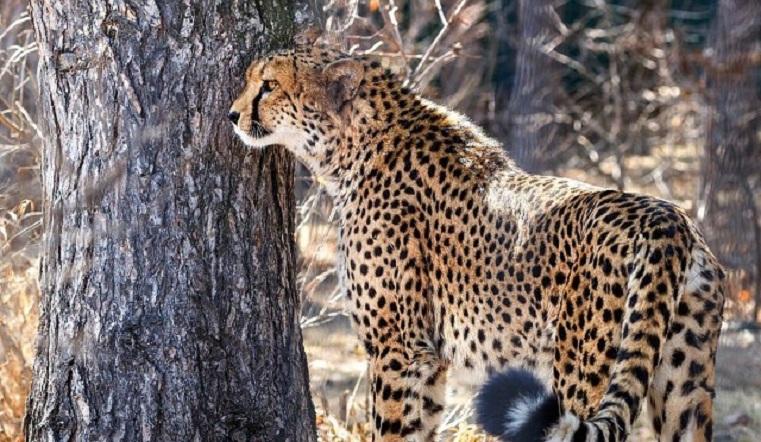 Ласковые звери. Огромные кошки из челябинского зоопарка умилили соцсети