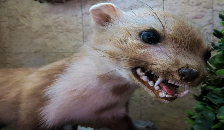 Животные и люди в опасности. В Челябинской области выявлено несколько очагов бешенства