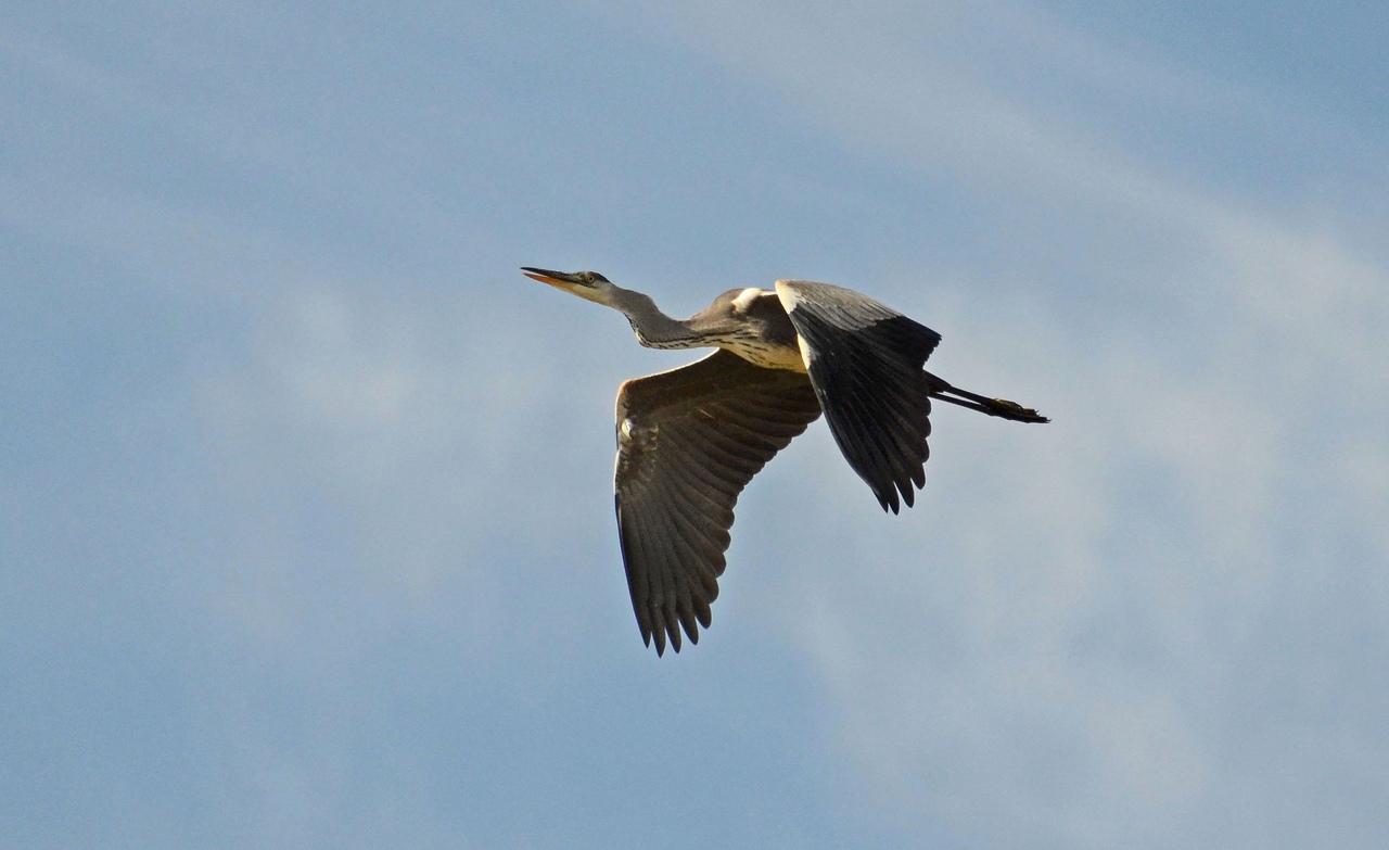 Полетела на юг. Странно кричащую птицу запечатлели на Южном Урале