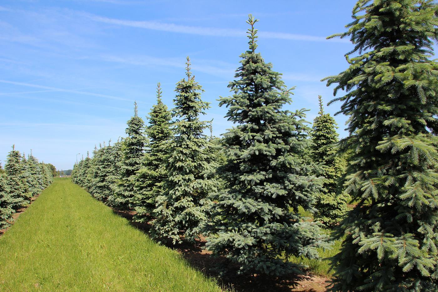 Детский сад для деревьев. В питомнике на Южном Урале вырастили больше 13 млн. саженцев