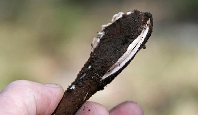 Зомби и сигары дьявола. 15 поразительных фактов о грибах