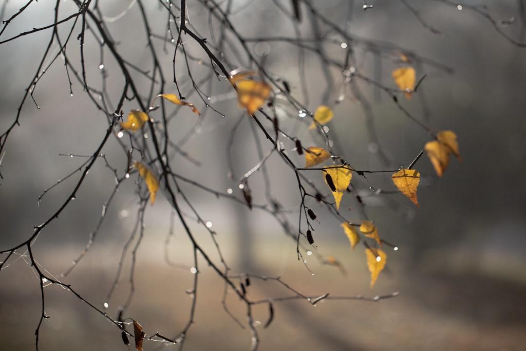 Дожди и сильный ветер: МЧС сообщает об ухудшении погоды в Челябинской области