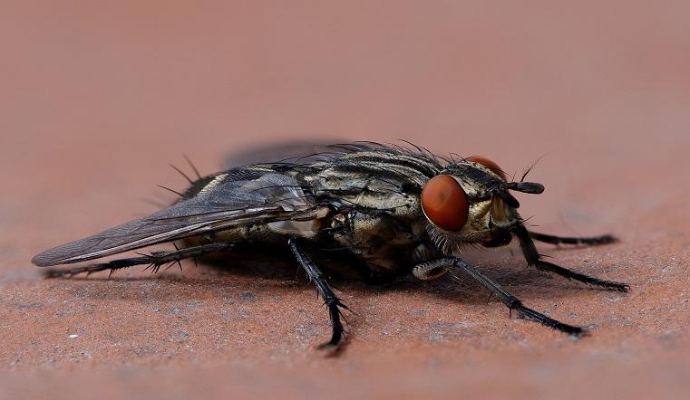 Крылатые вредители. Жители Челябинской области обеспокоены нашествием мух