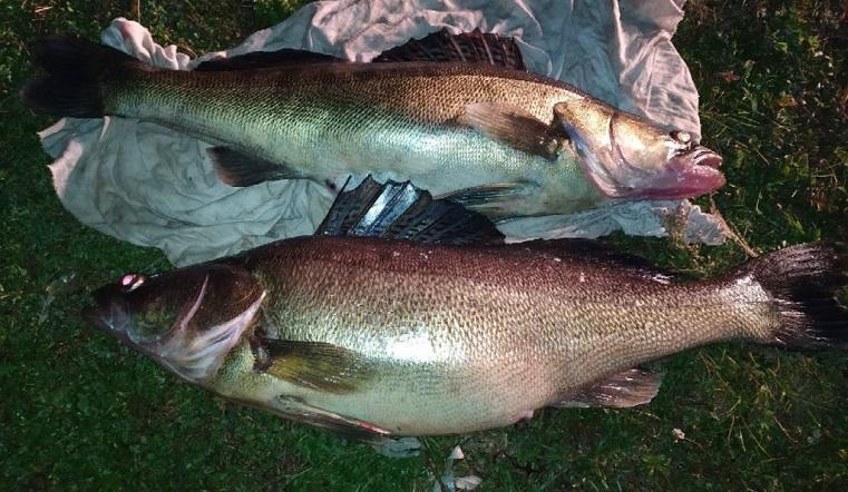 Любит карамельки. Гигантскую прожорливую рыбу поймали на Урале