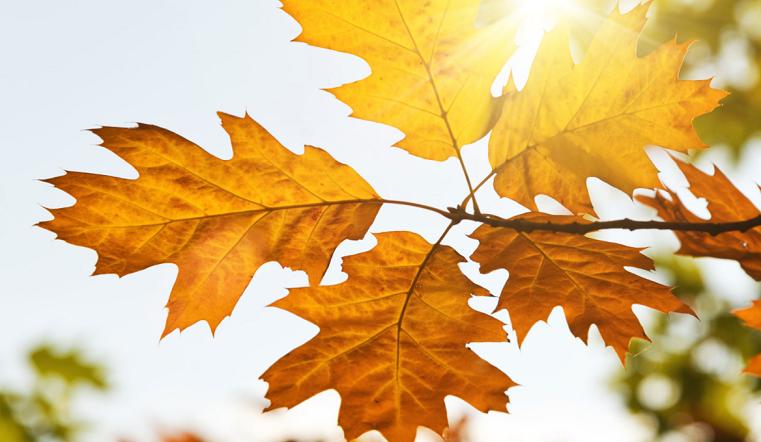 Осеннее равноденствие 2020: чего опасаться в високосный год