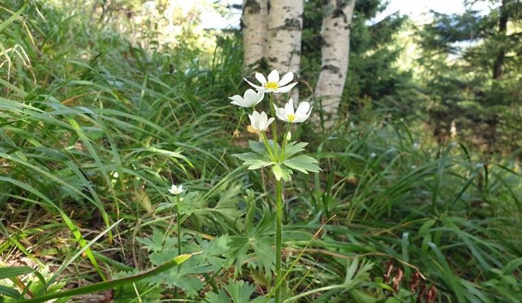 Творится что-то невероятное. Растения на Урале перепутали сезон и зацвели повторно