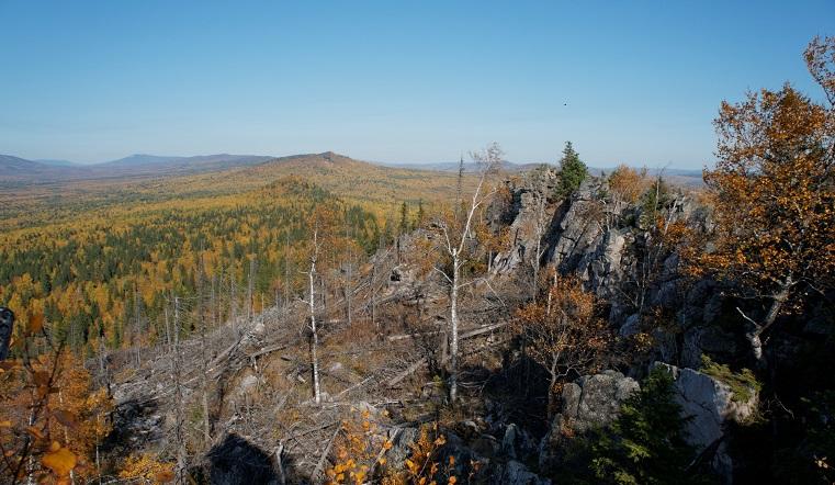 Новый метеорит? В Челябинской области обнаружили аномальный участок леса
