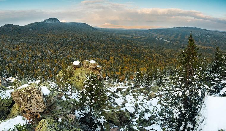 Природа сбита с толку. В Челябинской области повторно зацвела верба и растут грибы