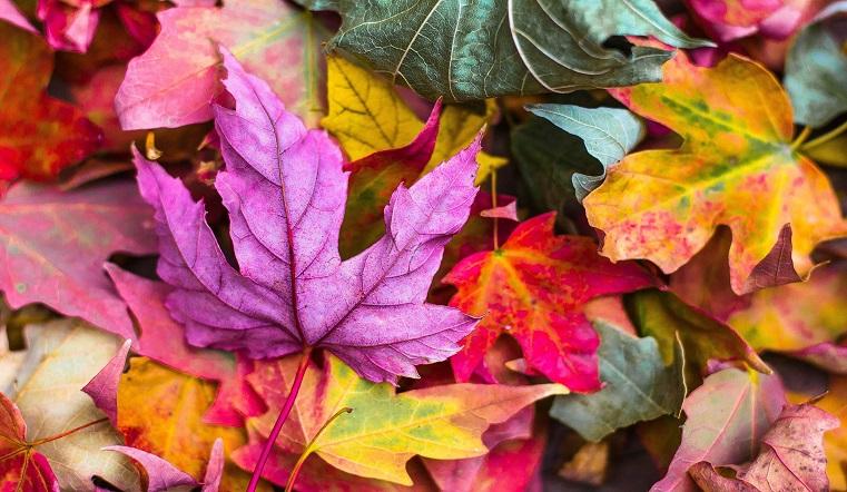 Запах листьев. Ученые рассказали, почему осенний воздух приятно пахнет