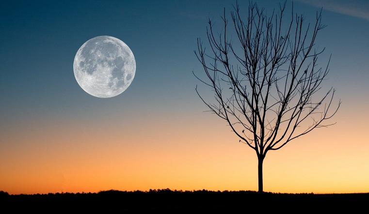 Лунный календарь садовода на февраль 2021