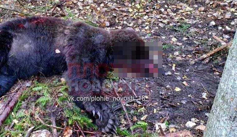 «Ужас на кладбище». Медведь раскопал могилы на Урале