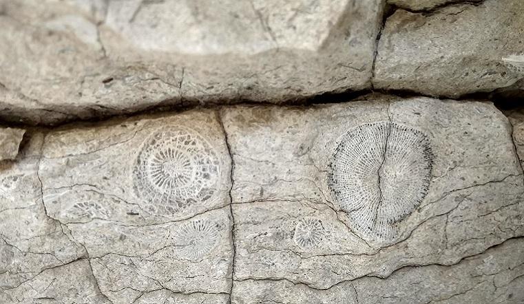Сокровища, ждавшие 500 млн лет. Артефакты древних времен нашли на Урале
