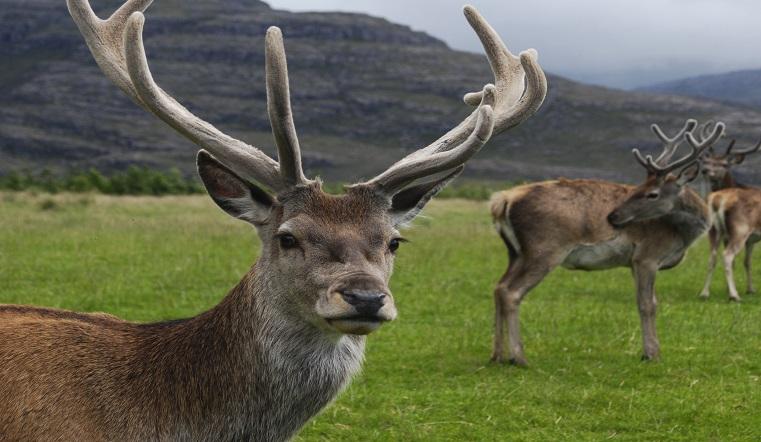 Издают звуки ржавых ворот. В Челябинском зоопарке рассказали о странном поведении оленей ВИДЕО