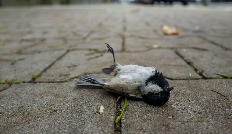 Дождь из мертвых птиц. Погибшие синицы усеяли дороги одного из районов Челябинска