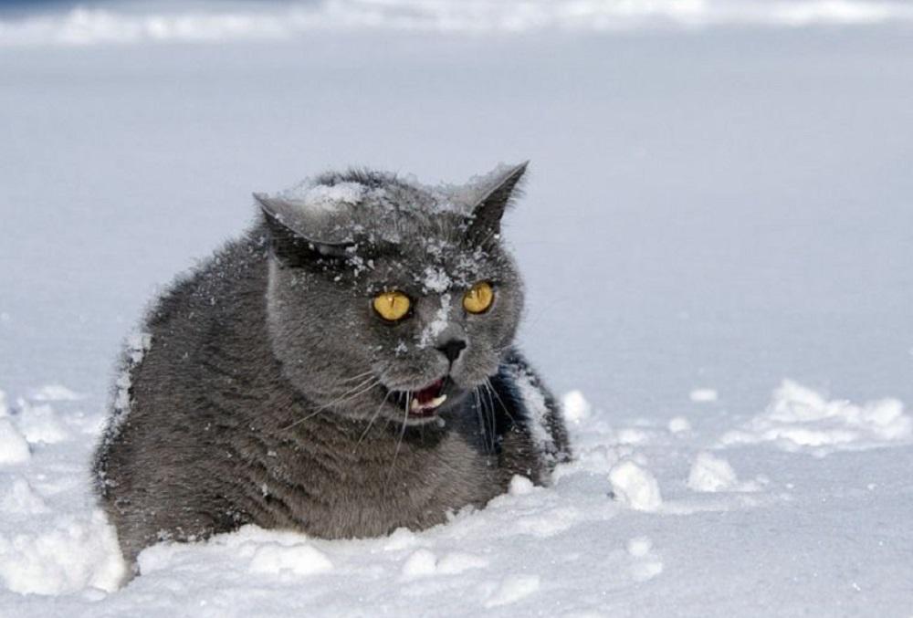 Зимняя оттепель задержится в Челябинской области на несколько дней