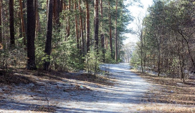 Судьба памятника природы. В Законодательном собрании Челябинска обсудили состояние городского бора