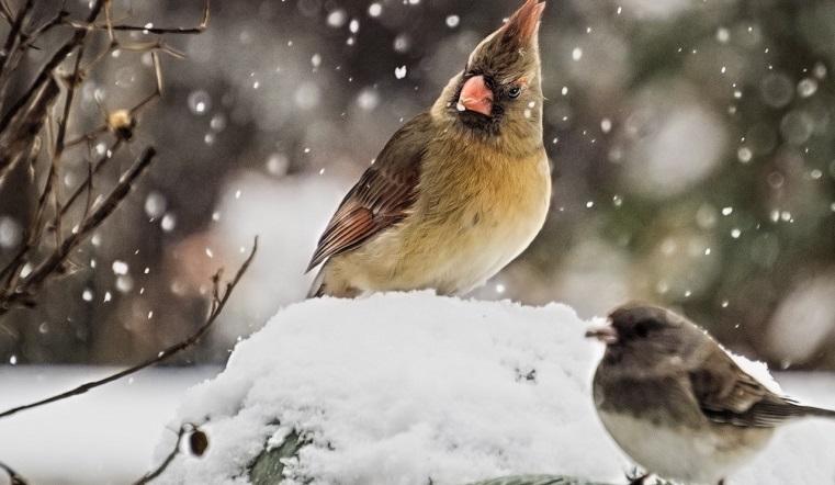 Снегопад и высокое давление. Синоптики рассказали о сюрпризах погоды в Челябинской области