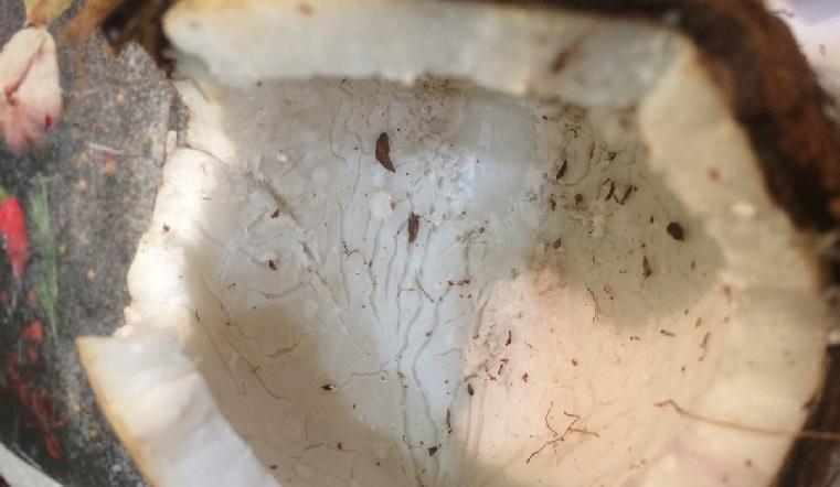 Отвратительная начинка. Гранаты с червями внутри нашли на прилавках на Урале