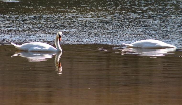 Самые большие, быстрые и таинственные. Орнитологи рассказали о необычных птицах Челябинской области