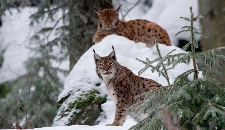 Следы невиданных зверей. На Урале разгадывают, кто гуляет по снежным горам