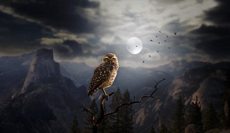 Лунный календарь на 7 декабря. Время строить планы и идти к мечте