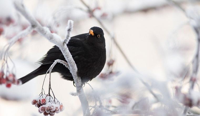 Странности погоды: в Челябинскую область идут морозы