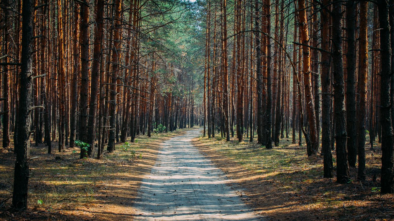 Сохранить природную красоту. В Челябинске решают судьбу городского бора