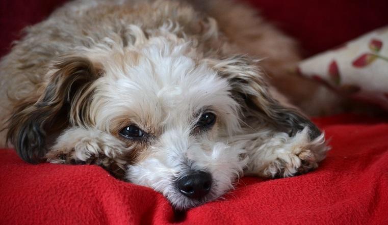 Гороскоп на 2021 год Быка: Собак ждут перемены в жизни и новые успехи