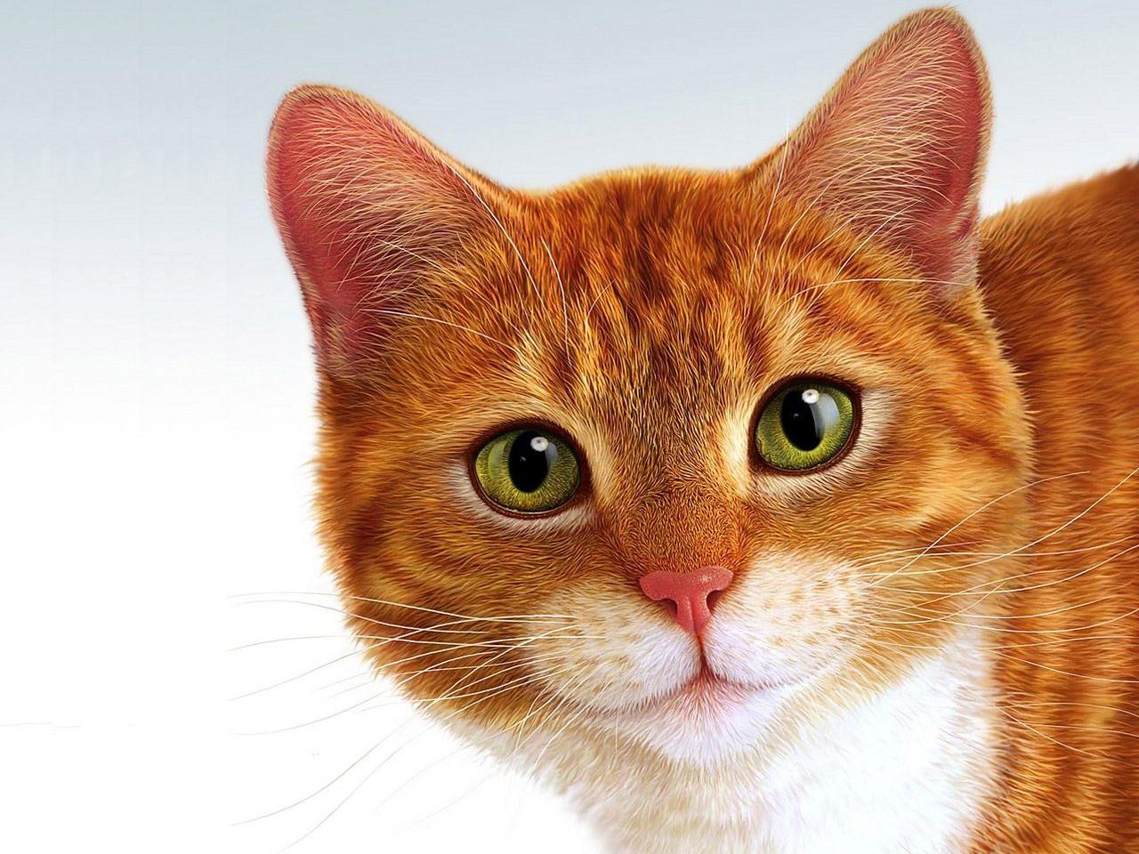 Гороскоп: месяц, когда у вас появилась кошка, расскажет о ее предназначении