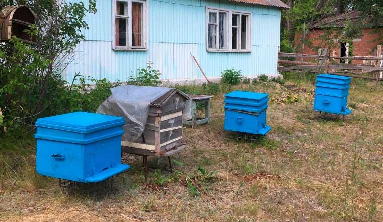 Труженицы с характером. Злых пчел в Челябинской области отправили на зимовку